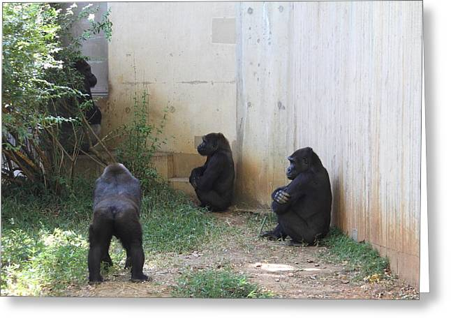 Gorilla Photographs Greeting Cards - National Zoo - Gorilla - 01139 Greeting Card by DC Photographer