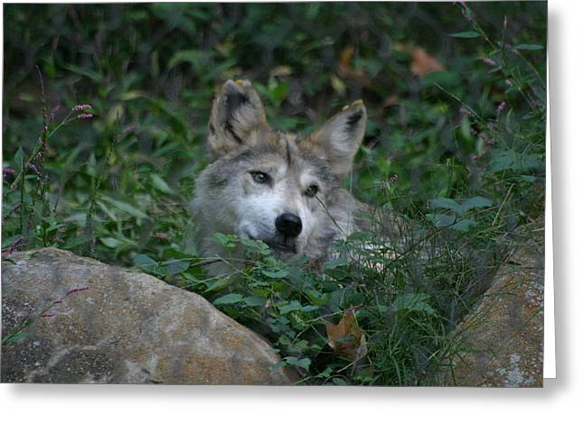 Mammals Greeting Cards - National Zoo - Large Mammal - 12126 Greeting Card by DC Photographer