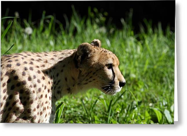 Big Photographs Greeting Cards - National Zoo - Leopard - 011316 Greeting Card by DC Photographer