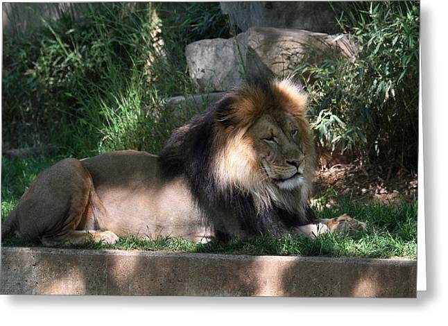 National Zoo - Lion - 011317 Greeting Card by DC Photographer