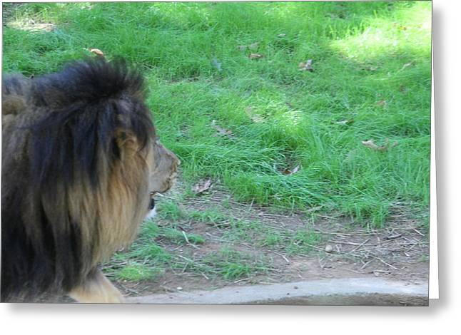 Lions Greeting Cards - National Zoo - Lion - 01134 Greeting Card by DC Photographer