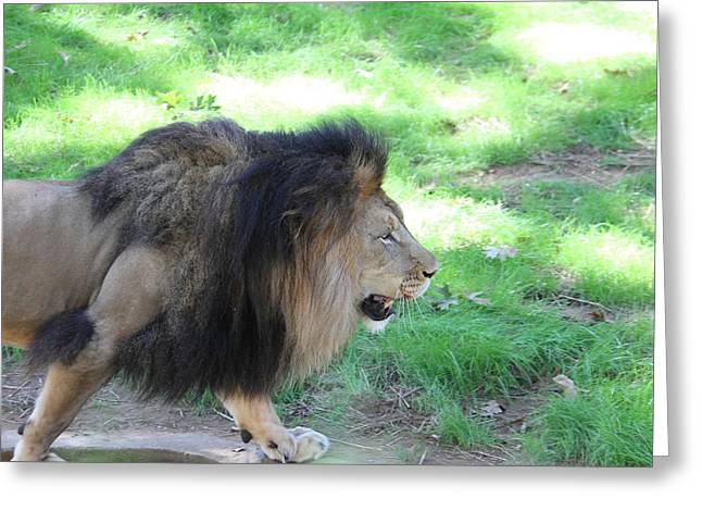 National Zoo - Lion - 01135 Greeting Card by DC Photographer