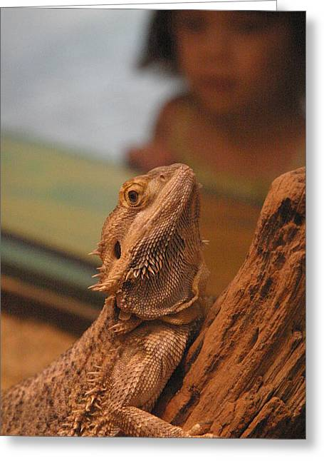 Lizard Greeting Cards - National Zoo - Lizard - 12123 Greeting Card by DC Photographer