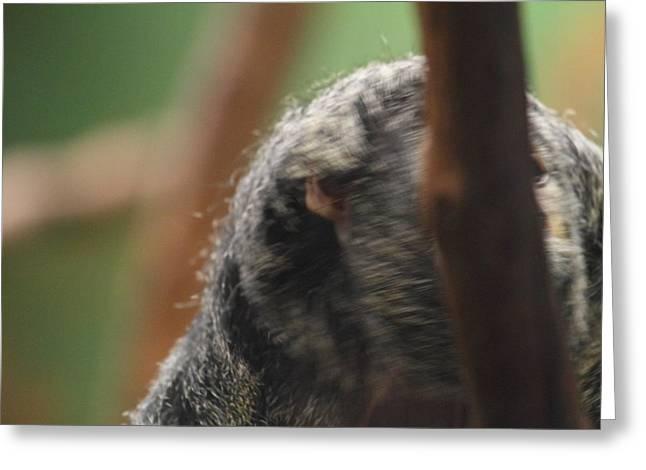 Washington Greeting Cards - National Zoo - Mammal - 01134 Greeting Card by DC Photographer