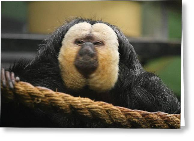 National Zoo - Mammal - 01136 Greeting Card by DC Photographer