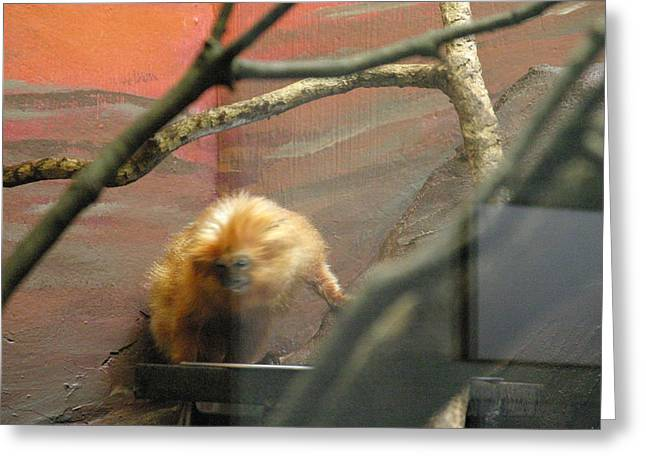 National Zoo - Mammal - 121215 Greeting Card by DC Photographer