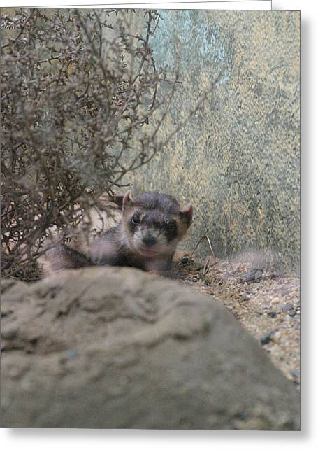 Mammals Greeting Cards - National Zoo - Mammal - 121218 Greeting Card by DC Photographer