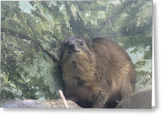 Mammals Greeting Cards - National Zoo - Mammal - 121220 Greeting Card by DC Photographer