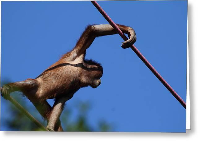 Orangutan Greeting Cards - National Zoo - Orangutan - 011320 Greeting Card by DC Photographer