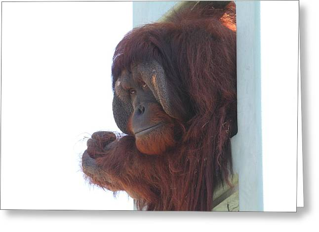 National Zoo - Orangutan - 01136 Greeting Card by DC Photographer