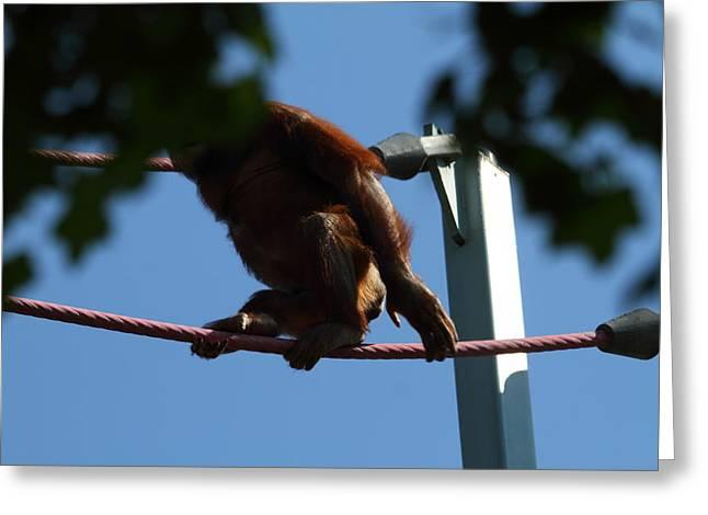 National Zoo - Orangutan - 01139 Greeting Card by DC Photographer