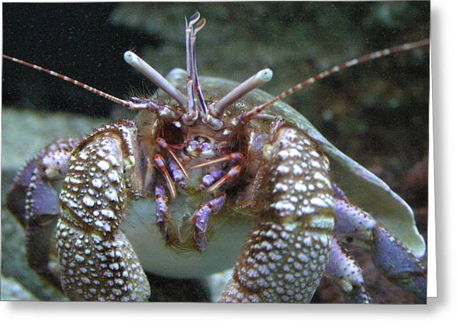 Sea Photographs Greeting Cards - National Zoo - Sea Life - 12127 Greeting Card by DC Photographer