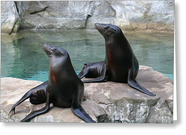 Sealion Greeting Cards - National Zoo - Sea Lion - 12123 Greeting Card by DC Photographer