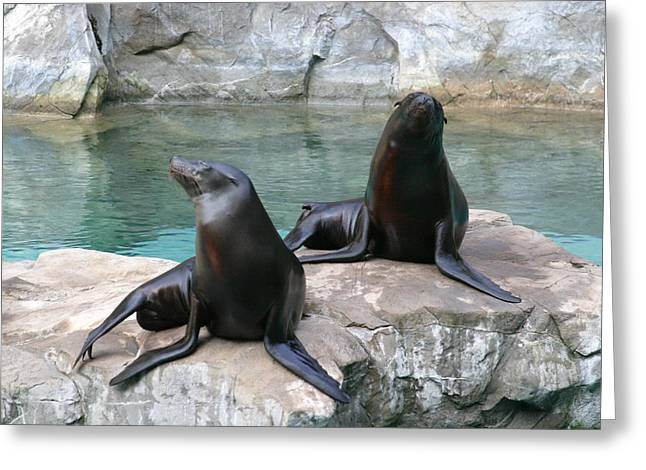 Best Sellers -  - Lions Greeting Cards - National Zoo - Sea Lion - 12124 Greeting Card by DC Photographer
