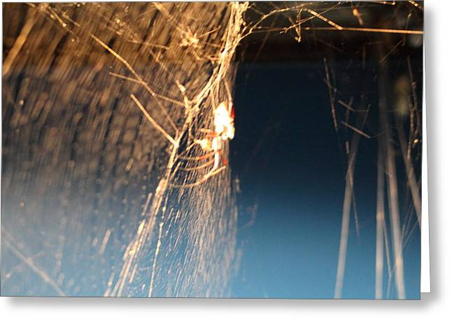 National Zoo - Spider - 01133 Greeting Card by DC Photographer