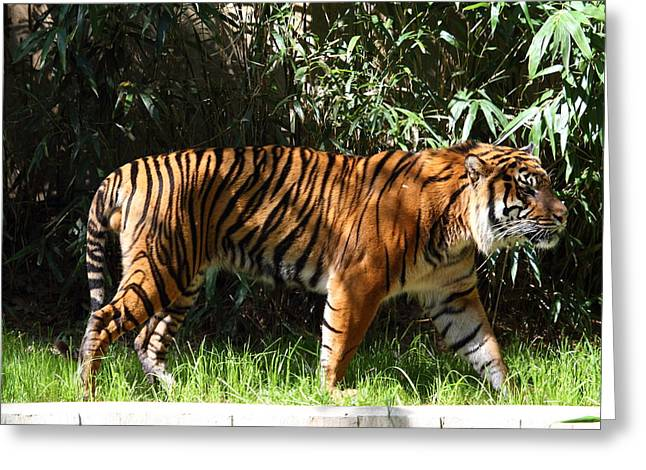 National Zoo - Tiger - 01138 Greeting Card by DC Photographer