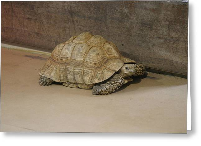 National Zoo - Turtle - 12121 Greeting Card by DC Photographer