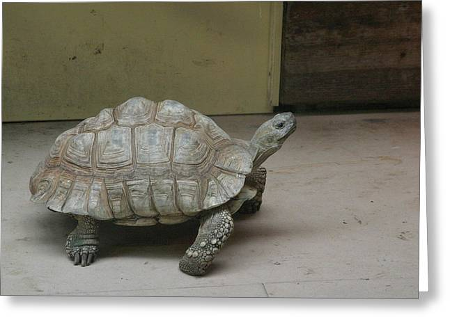 National Zoo - Turtle - 12128 Greeting Card by DC Photographer