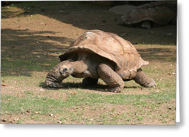Shell Greeting Cards - National Zoo - Turtle - 12129 Greeting Card by DC Photographer