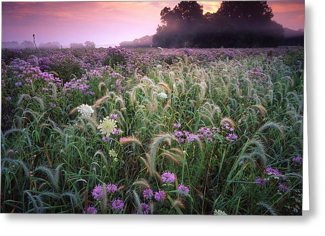 Hack-ma-tack National Wildlife Refuge Greeting Cards - Native Garden  Greeting Card by Ray Mathis