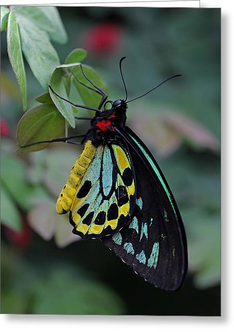 Natural Awakenings Greeting Card by Juergen Roth