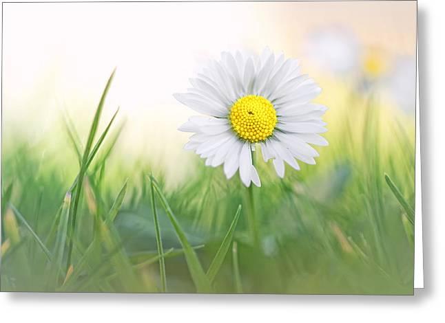 Bob Daalder Greeting Cards - Natural born beauty... Greeting Card by Bob Daalder