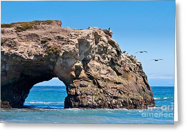 Santa Cruz Greeting Cards - Natural Bridges State Beach in Santa Cruz California. Greeting Card by Jamie Pham