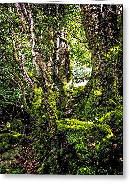 Lush Green Greeting Cards - Natural Emeralds. I Wicklow. Ireland Greeting Card by Jenny Rainbow