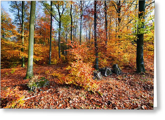 Vibrant Green Greeting Cards - Natural forest in autumn Greeting Card by Michal Bednarek