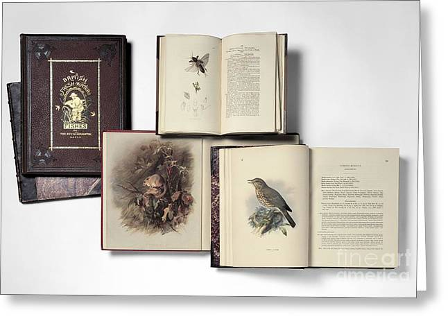 Dormouse Greeting Cards - Natural History Books Greeting Card by Natural History Museum, London