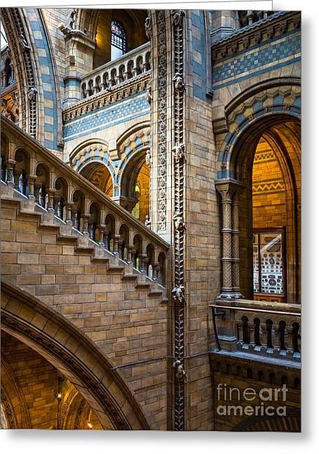 Darwin Greeting Cards - Natural History Museum staircase Greeting Card by Inge Johnsson