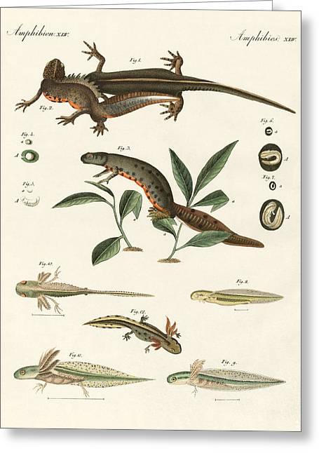 Fire Salamander Greeting Cards - Natural history of sea salamander Greeting Card by Splendid Art Prints