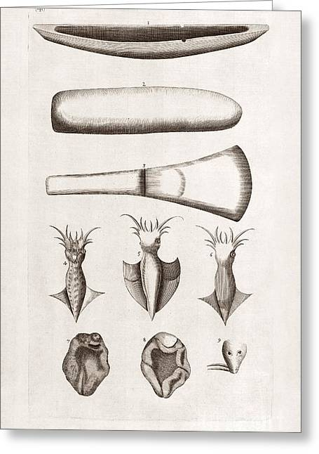 History Derbyshire Greeting Cards - Natural History Specimens, 18th Century Greeting Card by Middle Temple Library