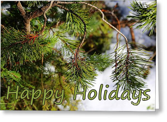 Pine Needles Greeting Cards - Natural Holiday Card Greeting Card by Carol Groenen