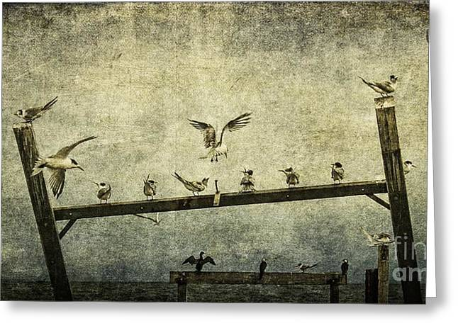 Tern Greeting Cards - Natural Order Greeting Card by Andrew Paranavitana