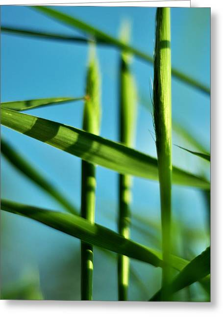 Green Surreal Geometry Greeting Cards - Natural Order Greeting Card by Rebecca Sherman