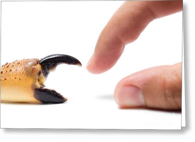 Nippers Greeting Cards - Natural tools Greeting Card by Sinisa Botas