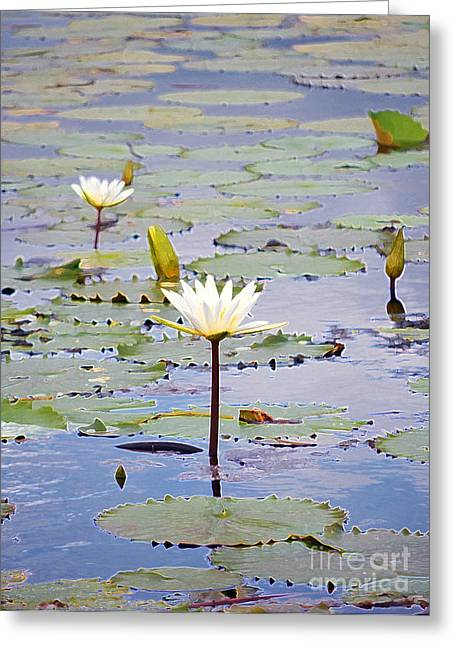 Floral Digital Art Digital Art Greeting Cards - Natural Water Lily Flowers and Pads Found on the East Side of Cozumel Mexico Accented Edges Digital  Greeting Card by Shawn O