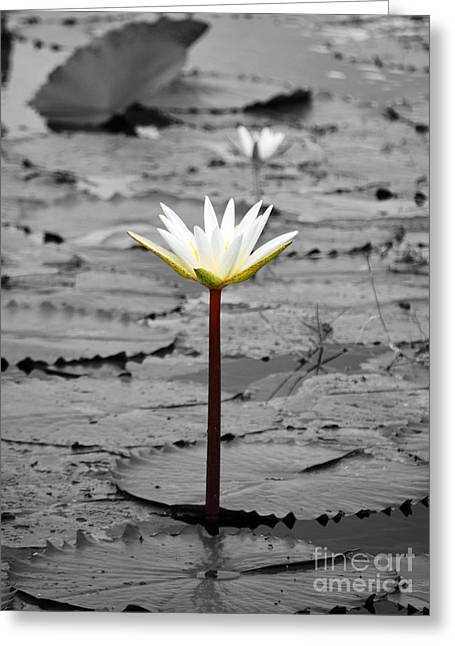 Lilly Pads Greeting Cards - Natural Water Lily Flowers and Pads Found on the Eastside of Cozumel Mexico Color Splash Digital Art Greeting Card by Shawn O