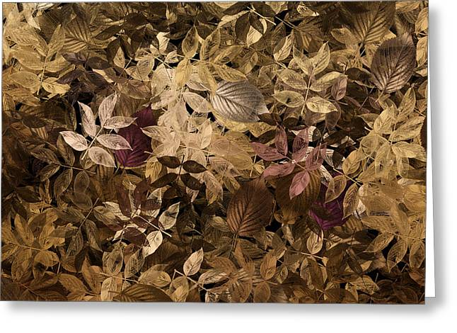Leaf Abstract Greeting Cards - Naturaleaves - gla02f Greeting Card by Variance Collections