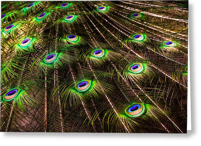 Birds Of A Feather Greeting Cards - Nature Abstracts Greeting Card by Karen Wiles