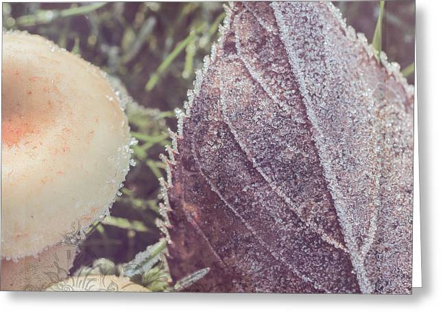 Photos Of Autumn Digital Greeting Cards - Nature Art - A Touch Of Frost Greeting Card by Jordan Blackstone