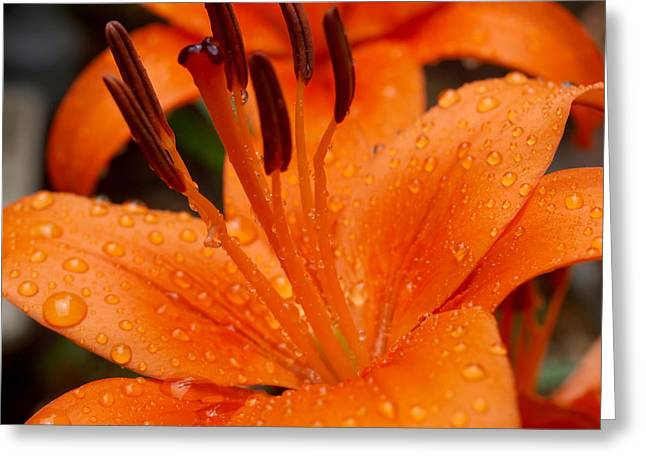Rain Droplet Photographs Greeting Cards - Nature at its best Greeting Card by Teri Schuster