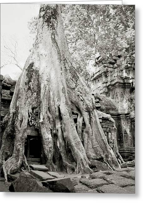 Temple Of Ta Prohm Greeting Cards - Nature At Ta Prohm  Greeting Card by Shaun Higson