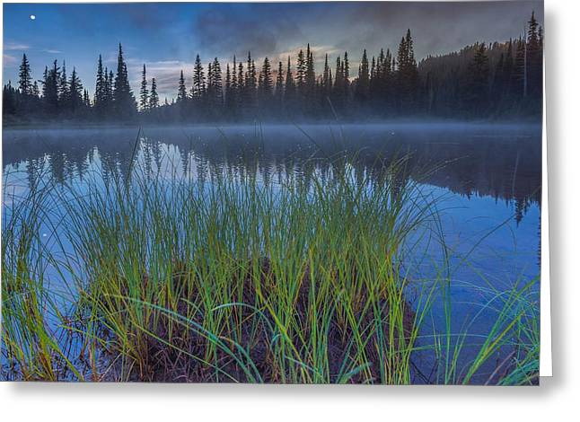 Pierce County Greeting Cards - Nature Awakes Greeting Card by Gene Garnace