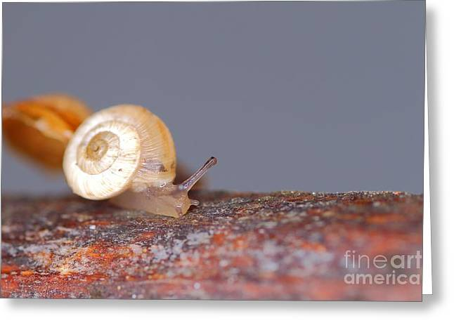 Close Focus Nature Scene Greeting Cards - Nature backgrounds with Snail Greeting Card by Gregory DUBUS