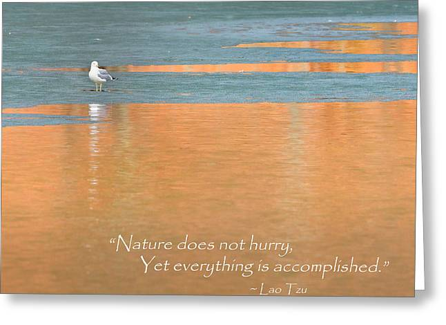 Square Greeting Cards - Nature Does Not Hurry Square Greeting Card by Bill  Wakeley