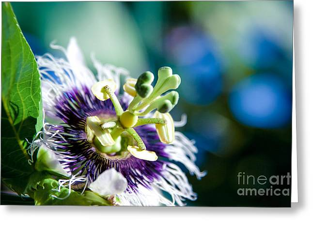 I Fiori Greeting Cards - Nature in Poetry Greeting Card by Sharon Mau