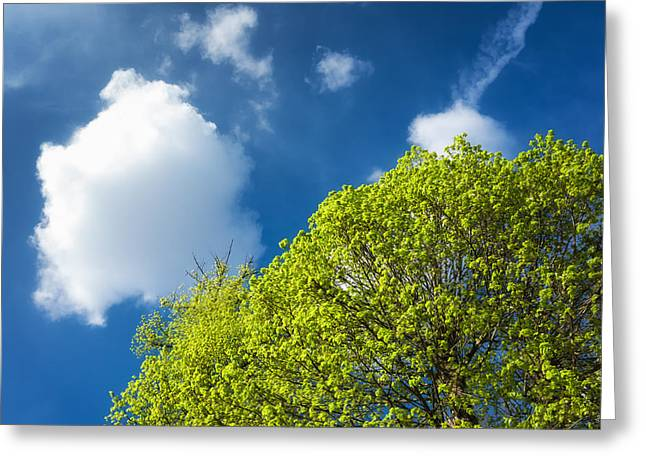 Fruehling Greeting Cards - Nature in spring - bright green tree and blue sky Greeting Card by Matthias Hauser