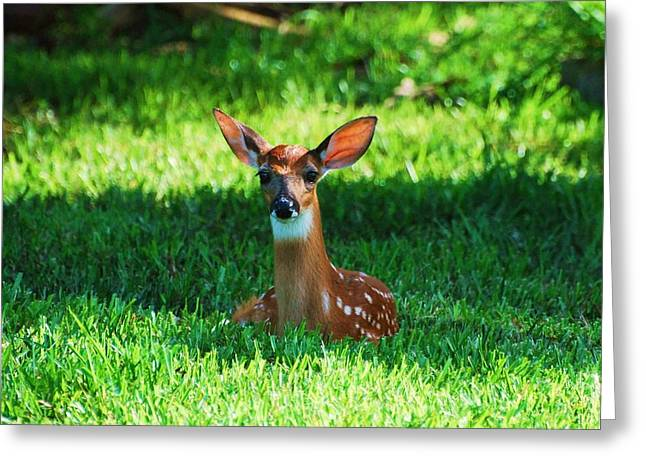 Fawn Mixed Media Greeting Cards - Nature in the back yard  Greeting Card by Davids Digits